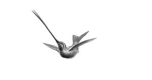 tropischer vogel